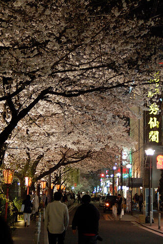 Kyoto Sakura at Night | © ben-lei via Flickr