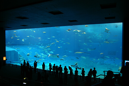 Okinawa Churaumi Aquarium | © Hideyuki Kamon via Flickr